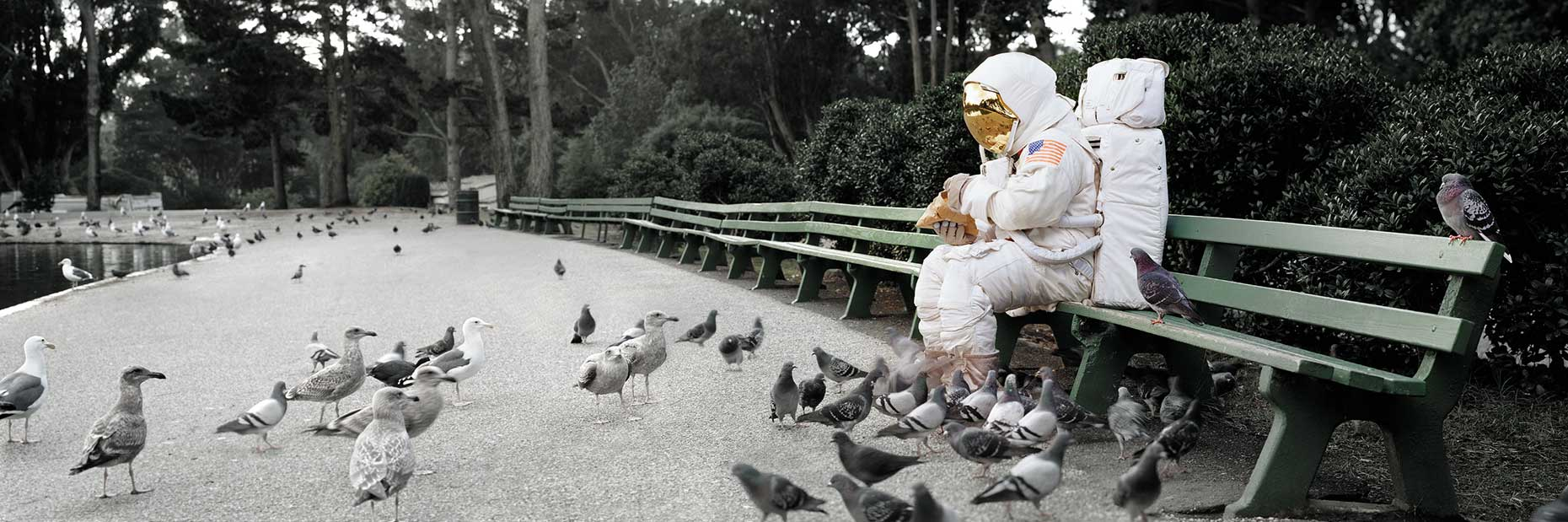 Astronaut_pigeons_RESIZED_FOR_WEB